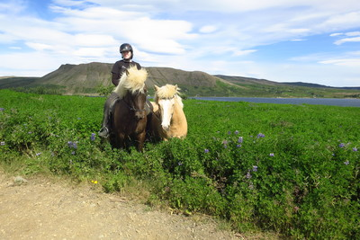 Enjoy riding Tölt on great riding paths around Reykjavik area. We ride on beaches, along lakes and over hills and mountains.