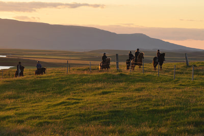 Horse Riding, Riding Lessons, Sagas, Volcanoes, Seals & Canyon ​- all in one tour!